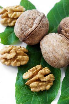 Free Walnuts Stock Photos - 14854043