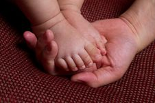 Feet Of The Baby Stock Photography