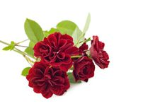 Free Red Roses Stock Photography - 14854652