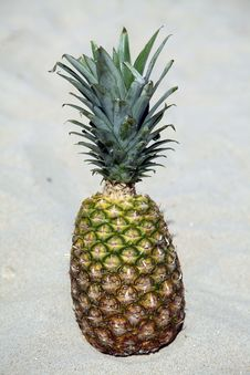 Free Pineapple Stock Photos - 14855533
