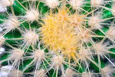 Free Cactus Royalty Free Stock Photo - 14856075