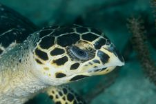 Free Turtle Head Royalty Free Stock Images - 14856909