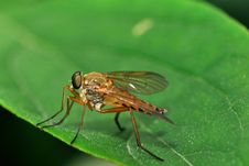 Free Brown Fly Stock Image - 14857211