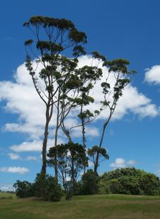Free Trees Stock Photography - 14857232