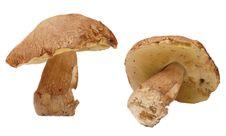 Free Mushrooms Stock Photo - 14857870