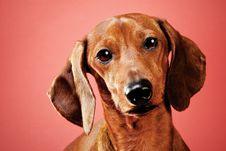Free Dog Royalty Free Stock Image - 14858206