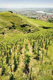 Free Vineyard In France Royalty Free Stock Photography - 14858207