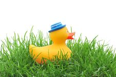 Free Rubber Duck In Grass Royalty Free Stock Photo - 14858865