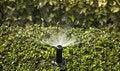 Free Header Spray In Garden Stock Images - 14865324