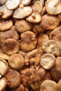 Free Mushrooms Royalty Free Stock Photo - 14869355