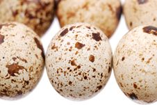 Free Photo Of The Quail Egg Stock Photo - 14863740