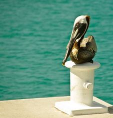 Free Pelican Resting Stock Images - 14865064