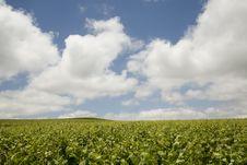 Free Vineyard And Sky Stock Photos - 14865113
