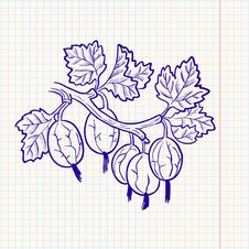Free Doodle Gooseberry Stock Photos - 14865473
