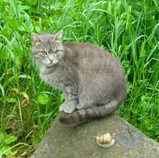 Cat And Snail. Royalty Free Stock Images