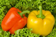 Pepper And Salad Royalty Free Stock Photo