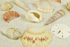 Free Sea Shells On Sand Royalty Free Stock Images - 14866989