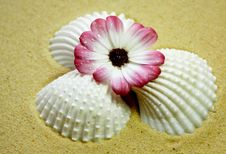 Free Shells And Flower Royalty Free Stock Image - 14867286