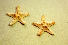 Free Two Starfish On Beach Stock Image - 14867301