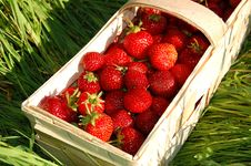 Free Strawberries Royalty Free Stock Photography - 14867657