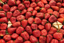 Free Strawberry Royalty Free Stock Photos - 14869348