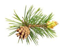 Free Cones. Stock Photo - 14869560