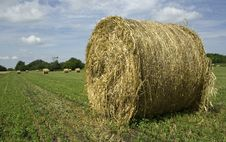 Free Bales Royalty Free Stock Images - 14869719