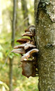 Free Mushroom Stock Images - 14871314