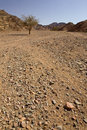 Free Tree In Desert Stock Photography - 14872062