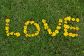 Free Love Written With Flowers Royalty Free Stock Images - 14875009