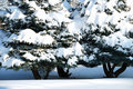 Free Background From A Fur-tree Covered With Snow Royalty Free Stock Photography - 14876557