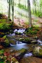 Free Waterfall In Forest Stock Photography - 14879242