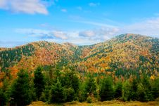 Free Autumn Forest Royalty Free Stock Photos - 14870468
