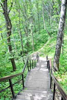 Free Stairs In The Woods Royalty Free Stock Photography - 14870757
