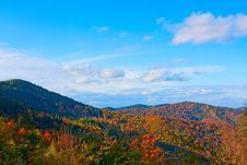 Free Autumn Forest Royalty Free Stock Image - 14870936
