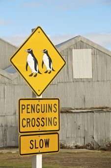 Penguin Crossing Royalty Free Stock Photography