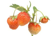 Free Strawberries On White Royalty Free Stock Photos - 14871048