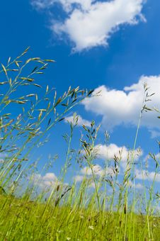Free Grass Royalty Free Stock Image - 14871126