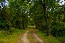 Free Woods Royalty Free Stock Image - 14871396