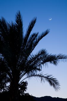 Free Silhouette Of A Palm. Royalty Free Stock Image - 14871906