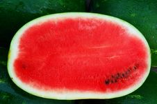 Free Watermelon Stock Images - 14872084