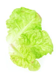 Free Three Lettuce Leaves Stock Photos - 14872223