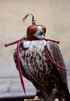 Free Blinded Hawk Stock Photo - 14873610
