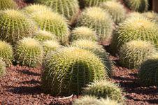 Free Cactus Detail Stock Photos - 14874333