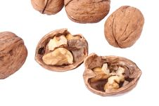 Free Walnut Royalty Free Stock Images - 14874379