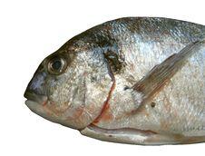 Free Fresh Fish Royalty Free Stock Photos - 14875678