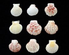 Free Variety Of Sea Shells Stock Images - 14875844