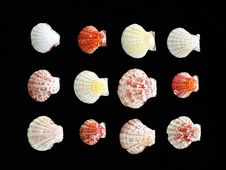 Free Variety Of Sea Shells Stock Photography - 14875892