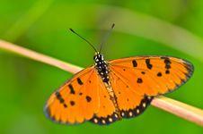 Free Orange Butterfly Stock Photos - 14875973