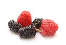 Free Isolated Berry: Raspberry And Mulberry Royalty Free Stock Images - 14876029